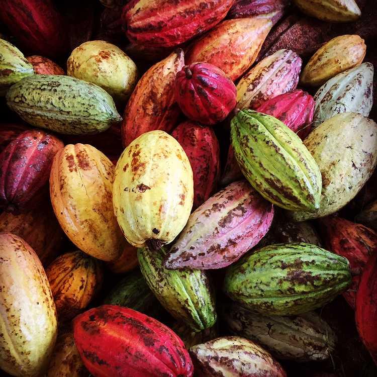 カラフルなカカオ豆の世界 | カカオ研究所 – Bean to Bar Chocolate ...